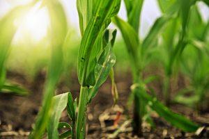 ND Corn Scholarships - 2016 Winners