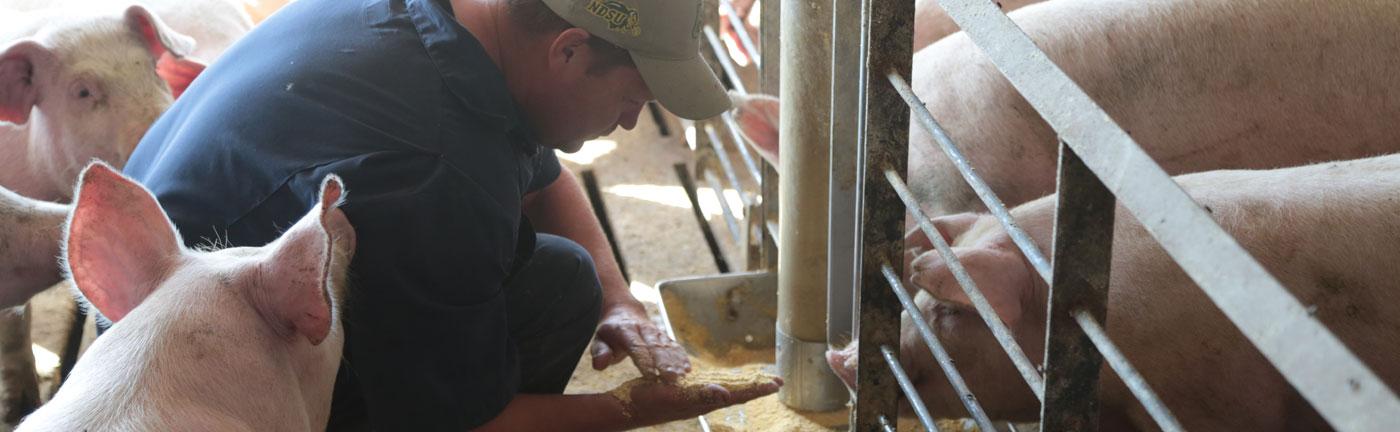 Slide NDUCA | Livestock